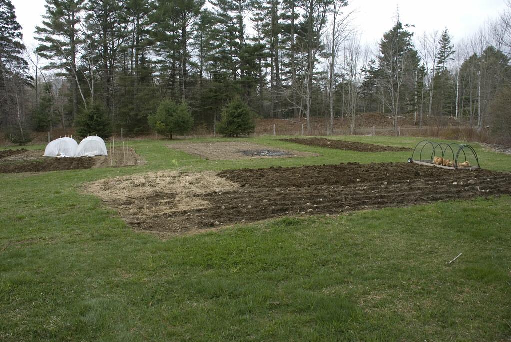 Ladleah's garden