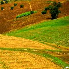 Fields (Osvaldo_Zoom) Tags: trees green yellow composition rural landscape nikon fields agriculture marche macerata d80 colorphotoaward montesangiusto