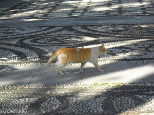 Granada cat