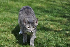 Here he comes! (cox-on-the-box - we have rain!) Tags: catnipaddicts