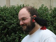 Michael and Oreb (Tapir Girl) Tags: bird toy knitting knit stuffedanimal perch amigurumi chough pyrrhocoraxpyrrhocorax