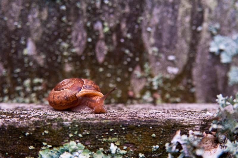 Day 206: Snail