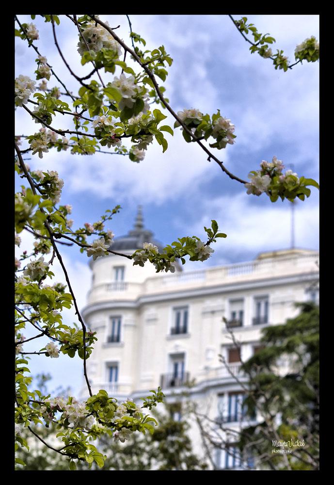 Primavera en la ciudad
