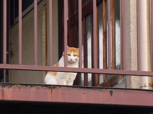 Today's Cat@2010-05-06