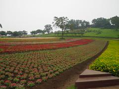 大溪花海農場