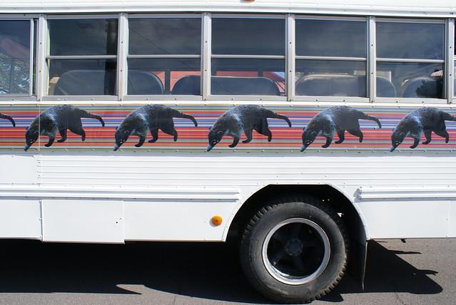 Coati bus!!!