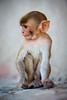 Baby Monkey (Photo Temple (Over Eleventy Bazillion Views!)) Tags: india temple monkey jaipur reallifeexperiences