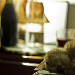 the curious case of the cat and the wine (Douglas E Pope) Tags: light portrait 6x6 cat focus bokeh melbourne 7d audel 14f abstractportrait bestofcats artblur canon7d beyondbokeh