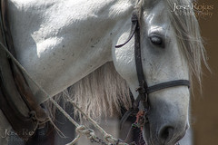 Caballo Blanco Antigua Guatemala HDR