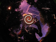 Millipede Cosmology... (Sea Moon) Tags: red orange brown selfportrait reflection spiral grey us unitedstates gray surreal fisheye bands northamerica cosmic millipede banded myriapod narceusamericanus myriapoda diplopoda narceus narceusamericanusannulariscomplex spirobolida spirobolidae