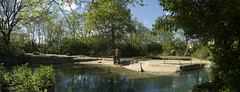 (j.fralin) Tags: panorama elephant zoo toledo