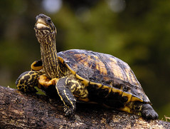 IMG_1460 turtle