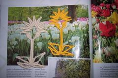 Fiori tra fiori (anna cenacchi) Tags: fiore macram margaretenspitze