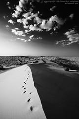 نفود احادي (Omar alsuhaibani - عمر السحيباني) Tags: desert عمر صحراء طعوس طعس نفود عنيزه احادي السحيباني الغضا