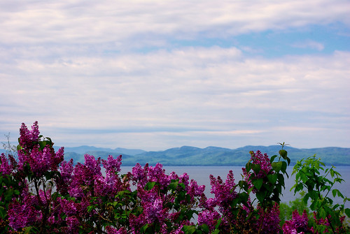 Lake Champlain and the Adirondacks with Lilacs