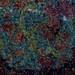 Rock365 : 29 05 2010 : Eclogite