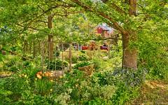 North Gower Garden