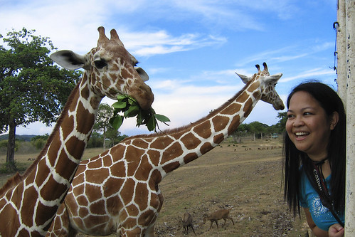 Alby and the Giraffes