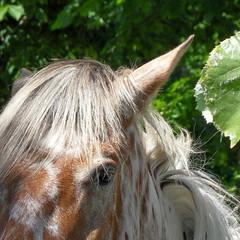 Horse (fotomie2009) Tags: horses horse animal fauna cavalli
