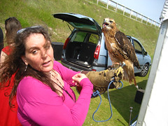 Molly and the hawk