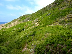 Sur le sentier de la côte de Punta di Corbu