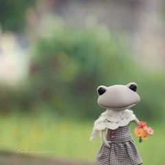 Wonder Frog (sⓘndy°) Tags: wonder frog