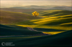 Road to Enlightenment Ver 2 (Zack Schnepf) Tags: road light tree green beautiful golden glow olive hills explore fantasy lone mystical storybook magical frontpage luminous whimsical palouse