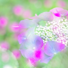Flower and flower (kAz_55) Tags: flower japan pentax chiba  kx  55300