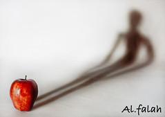 apple impact (Ghanayem) Tags: life light shadow red man apple club canon photography al still impact stillife falah bayt lothan ghanima ghanayem