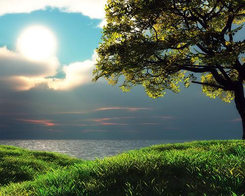 [フリー画像] 自然・風景, 樹木, 草原, 201009072300