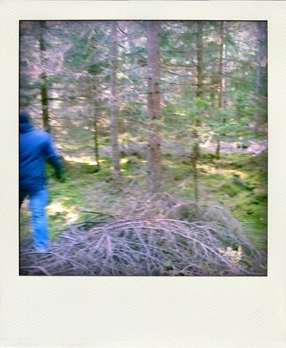 i skogen-pola