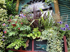 Windowbox Planting 1