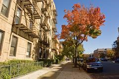 Autumn Comes to Astoria (Harris Graber) Tags: street newyorkcity autumn fall zeiss vanishingpoint wideangle queens astoria gothamist r1 redleaves changingseasons sonyr1 31stavenue zeiss143715mmvariosonnar