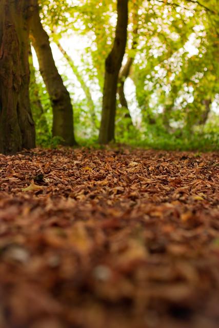 Depth Of Fall, Rickmansworth