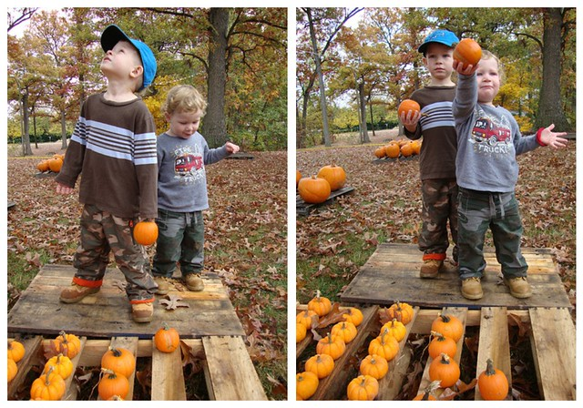 Pumpkin collage 2009