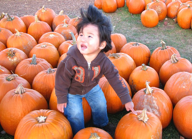 pumpkin patch 19