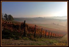 La bruma (Sergio Massano) Tags: italy piemonte vineyards langhe vigneti