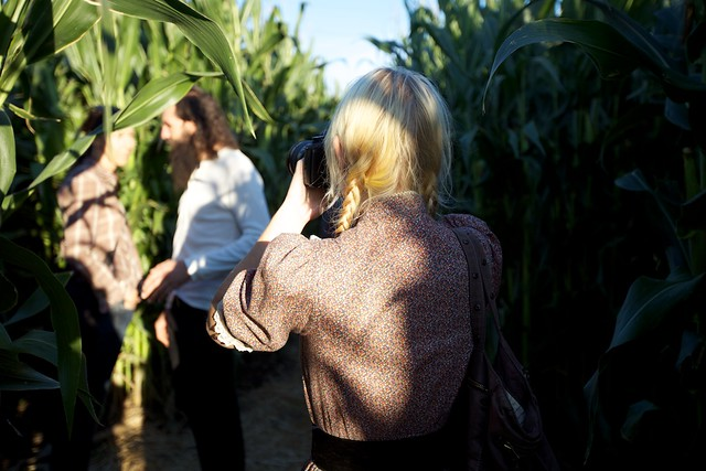 corn maze photos