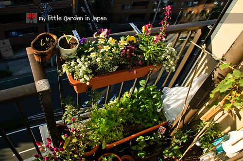 my-little-garden-in-japan-nov-2010