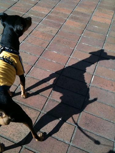 黒犬のシルエット