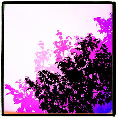 Trees of fall. (mikkers!) Tags: blue shadow white black color tree leaves silhouette purple pinhole highkey iphone pictureshow classictoy iphoneography