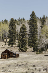 Old Cabin On A Meadow_20A0880 (Alfred J. Lockwood Photography) Tags: alfredjlockwood nature landscape pinetree meadow cabin clearsky rockymountains aspentrees spring morning colorado muellerstatepark