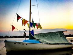 Oh Captain, my captain (Beegmnphoto) Tags: sailboat water blue heron sunset flags sky iphone7plus iphone minnesota minneapolis lakecalhoun sailing lake