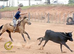 IMG_5851 (Edu Rickes) Tags: brazil horses brasil caballos cow cavalos rs riograndedosul sul tradicionalismo rodeio gaúchos beautifulshots piratini gineteada brazilianphotographers fotógrafosbrasileiros tirodelaço todososdireitosreservados fotógrafosgaúchos culturagaúcha edurickes belasimagens southofbrasil edurickesproduçõesfotográficas copyright©2010 fotografiaslegais