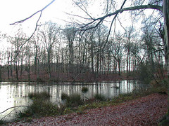 PC250142 (Gruble) Tags: ommen 3000z