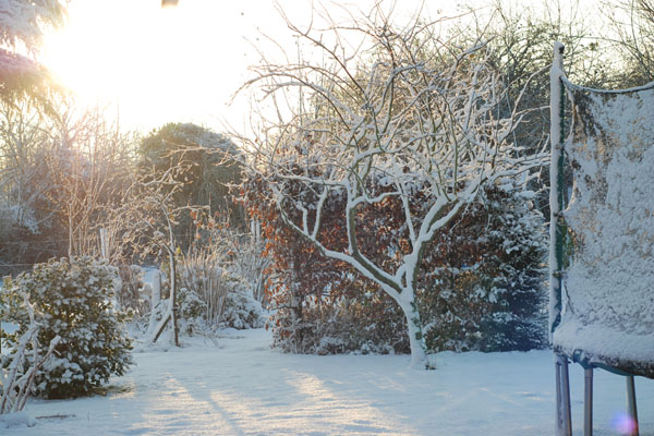 DSC_3704-garden-in-snow-light_small