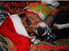 Merry Christmas! (faith goble) Tags: xmas friends dog art beagle artist poem photographer kentucky ky faith free hungover card larry creativecommons poet writer merrychristmas 2009 bowlinggreen eggnog goble faithgoble gographix faithgobleart