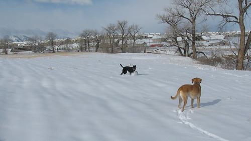 Snowy pups.