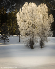 Iced dawn (Dave Arnold Photo) Tags: winter usa snow tree ice colo forest us photo colorado frost image picture frosty pic nationalforest photograph american co getty paco pagosasprings sanjaun 50d sanjuannationalforest davearnold greatimage topseven eastforkroad bootjackranch canon50d canonequipment canonphotographer darnold doublyniceshot arnoldd