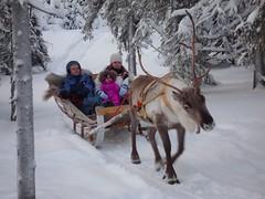 Reindeer Rides (timo_w2s) Tags: winter snow reindeer lapland kuusamo ruka lammintupa